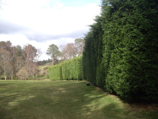 Wall of evergreen trees for shade and wind protection.