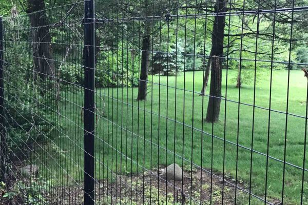 An image of a fence to keep deer out of a yard.